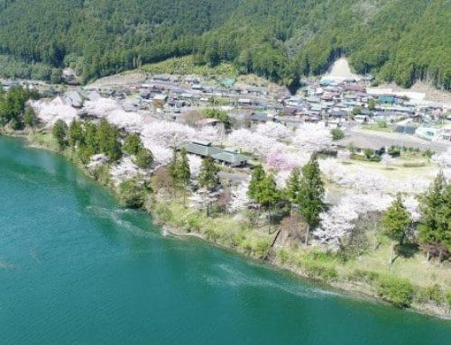 【絶景の中で村民の健康を管理する】和歌山のユニークな仕事を紹介!