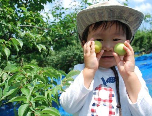 【紀州南高梅の現場をアップデート】和歌山のユニークな仕事を紹介!