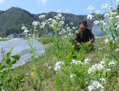 【ここいろ】山口県山口市。誰もが農業を始められるモデルを目指して|イタヤマノウエン