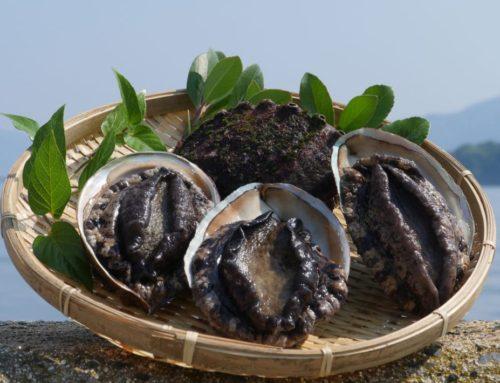 【地域おこし協力隊募集】自然・食・文化・人の魅力にあふれた「チャレンジできる島」、島根県西ノ島町で楽しみながら一緒に働きませんか?【PR】